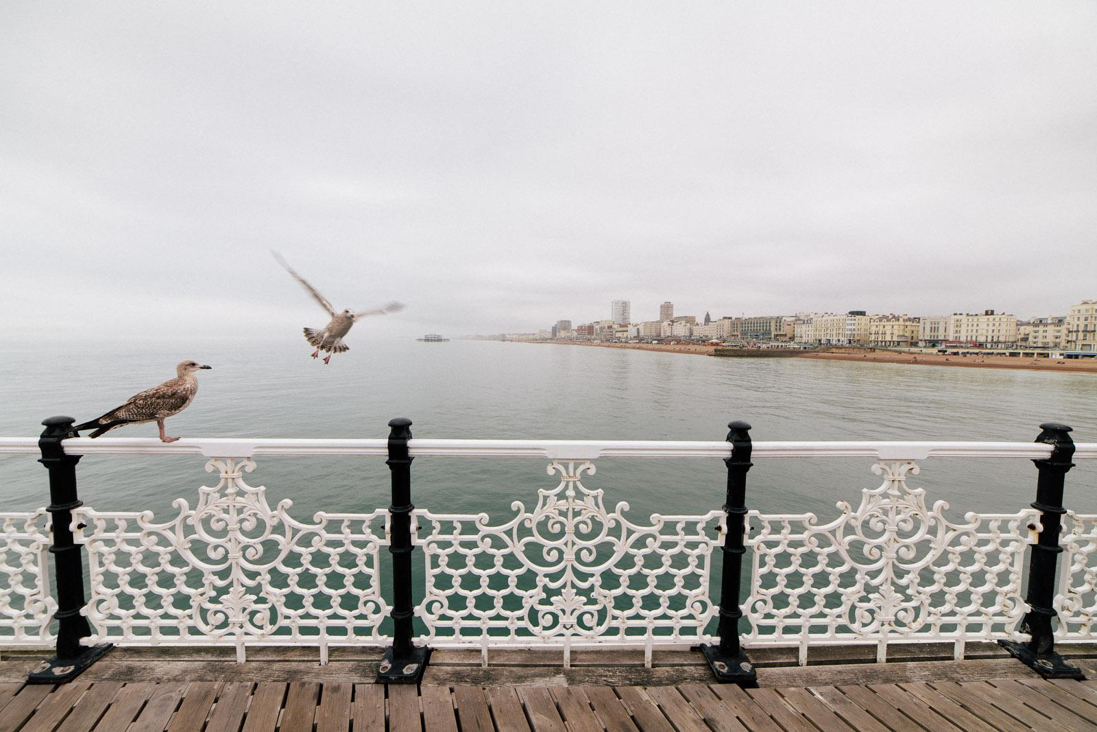 brighton-pier-seagulls