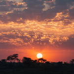 Serengeti – Sunrise