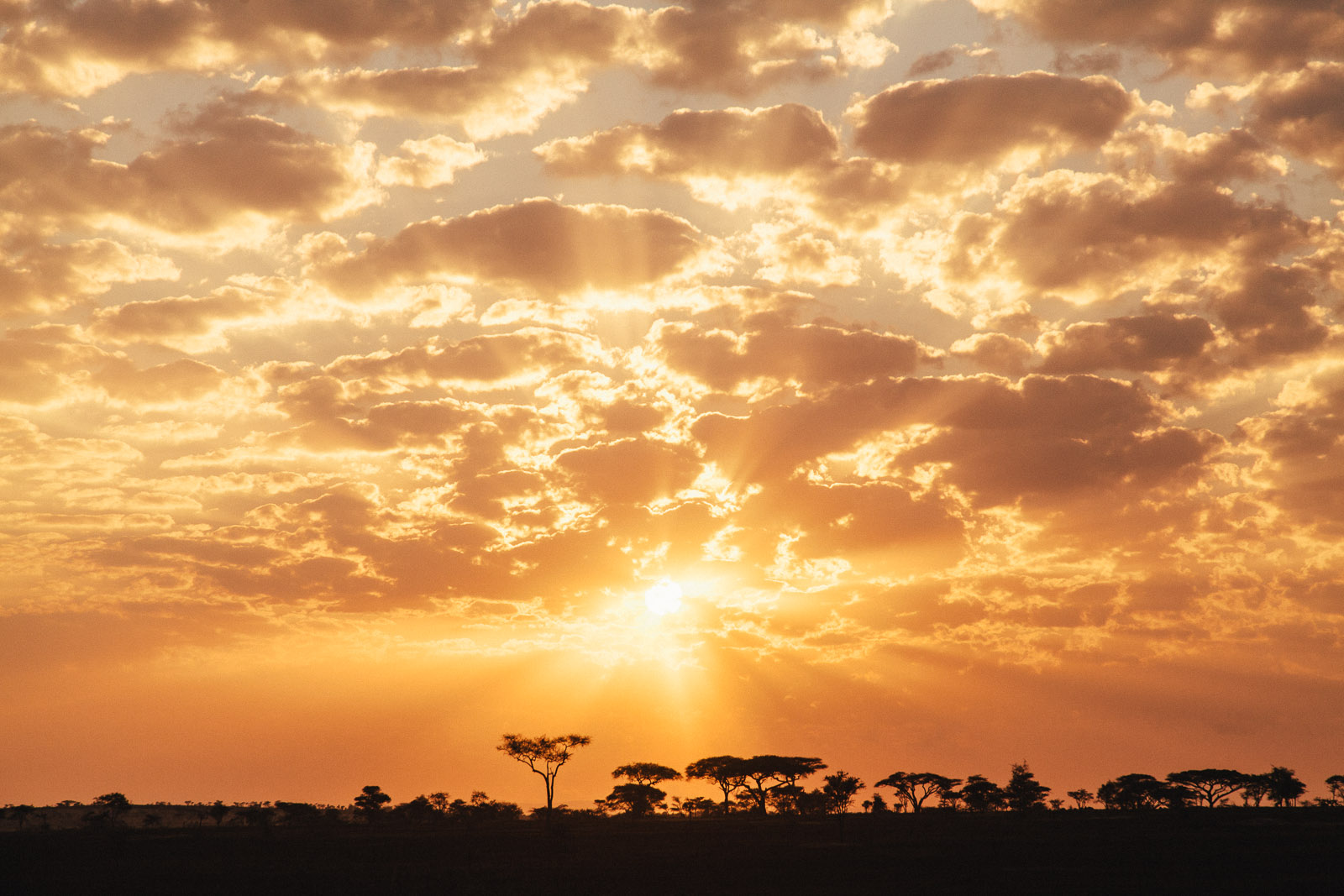 serengeti-sunrise-3
