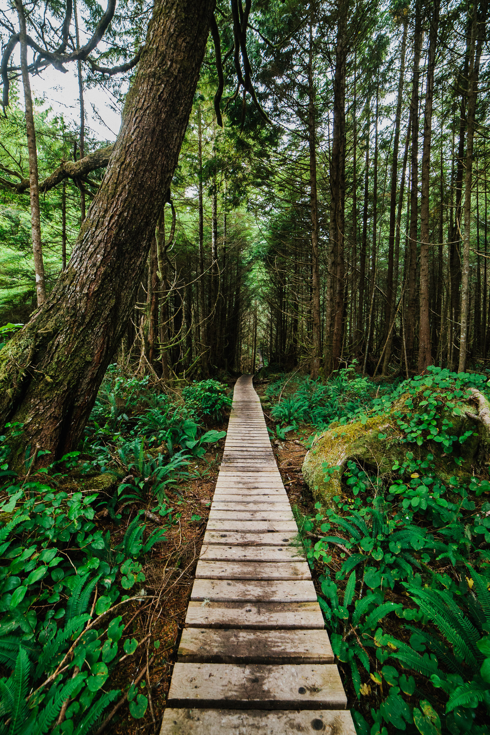 west coast trail forest boardwalk